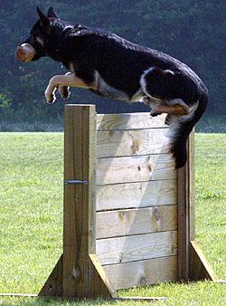 Logan jumping
